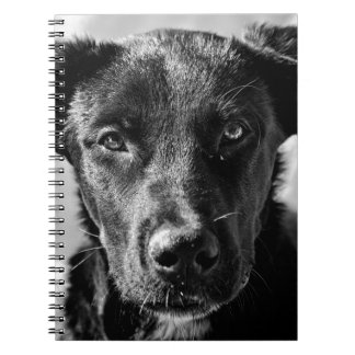 Canine Dog Pet Notebook
