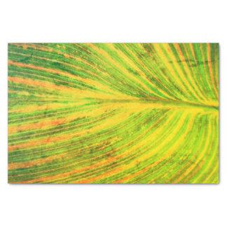 Canna Leaf Green Tissue Paper