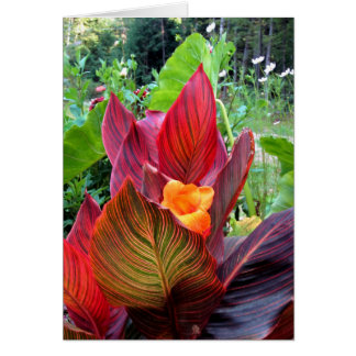 Canna Lily Stripes Card