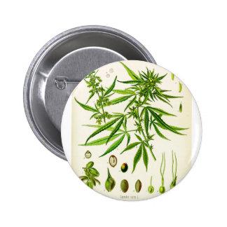 Cannabis sativa 2 inch round button