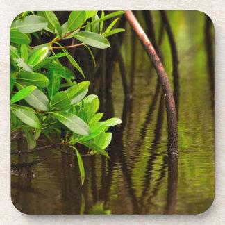 Canoeing Through Quiet Mangroves Beverage Coaster