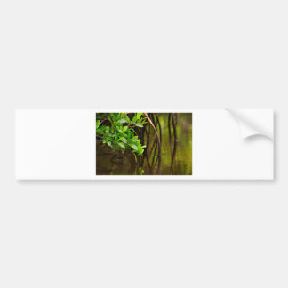 Canoeing Through Quiet Mangroves Bumper Sticker