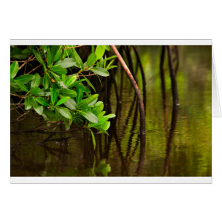 Canoeing Through Quiet Mangroves Card