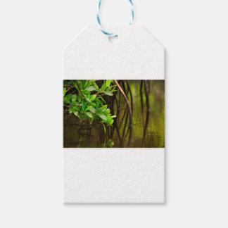 Canoeing Through Quiet Mangroves Pack Of Gift Tags
