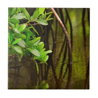 Canoeing Through Quiet Mangroves Tile