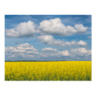 Canola Field & Clouds Postcard