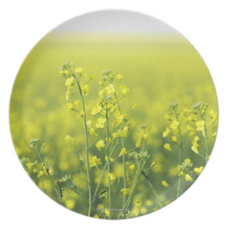 Canola Flowering in Field. Plates
