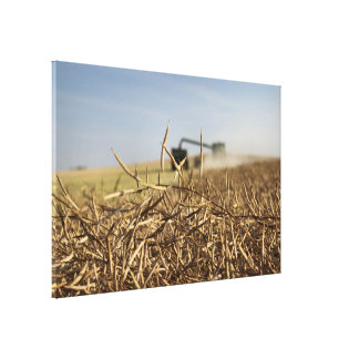 Canola Harvest Combine Grain Cart Canvas Print