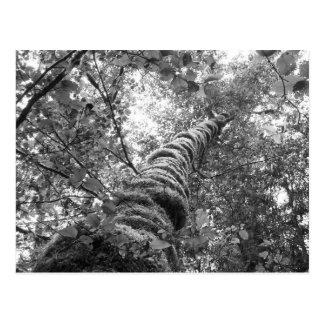 Canopy (b&w) Postcard