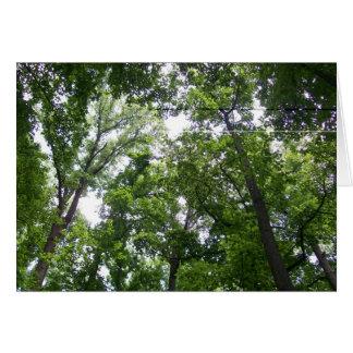 Canopy Card