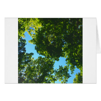 Canopy Daydream Card