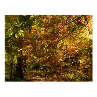 Canopy of Fall Leaves II Yellow Autumn Photography Postcard