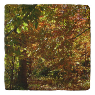 Canopy of Fall Leaves II Yellow Autumn Photography Trivet
