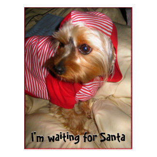 Can't Sleep  Little Yorkie on Christmas Eve Postcard