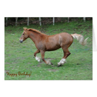 Cantering Welsh cob birthday Card