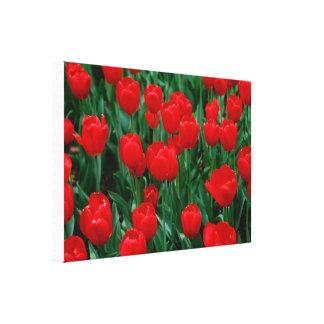 Canvas Stretched Canvas Prints