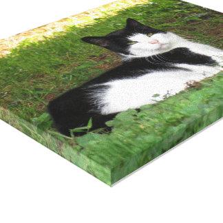 Canvas Cat Portrait Photo