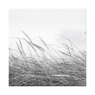 Canvas of dune grasses