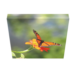 Canvas Print Butterfly on Mexican Sunflower