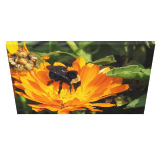 Canvas Print - Calendula and Bee