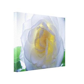 Canvas Print - Camellia in White