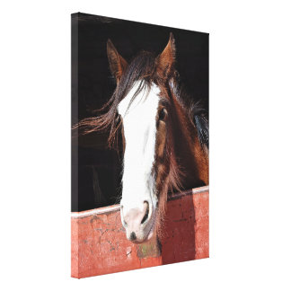 Canvas Print - Clydesdale Horse in a stable