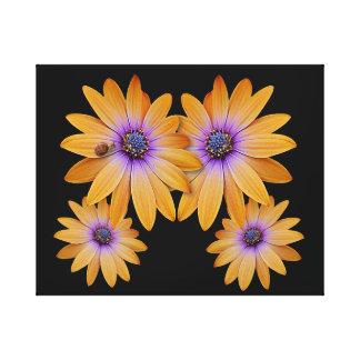 Canvas Print - Golden Daisy