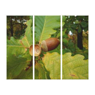 Canvas Print - Heart of the Oak