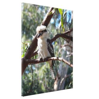 Canvas Print - Kookaburra Sits in the Old Gum Tree