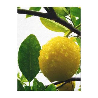 Canvas print - lemon in the rain