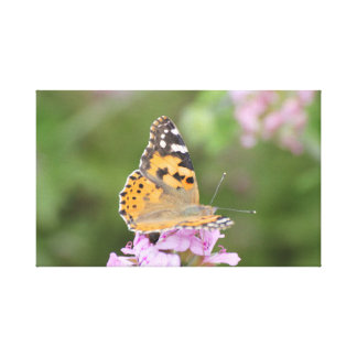 Canvas print of a butterfly photo.