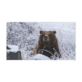 Canvas Print of Alaska Grizzly Bear
