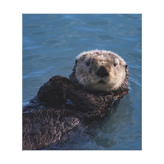 Canvas Print of Sea Otter in Resurrection Bay