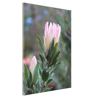 Canvas Print - Pink Protea Flower