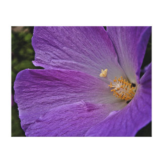 Canvas Print - Purple Glory