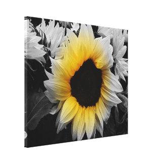Canvas Print - Sunflower