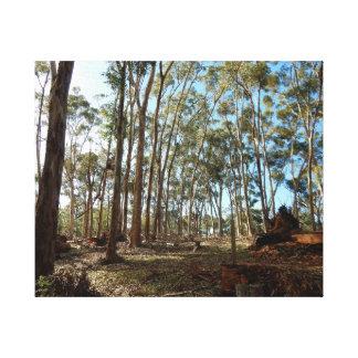 Canvas Print - Woodland Path