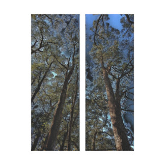 Canvas Print - Woodlands