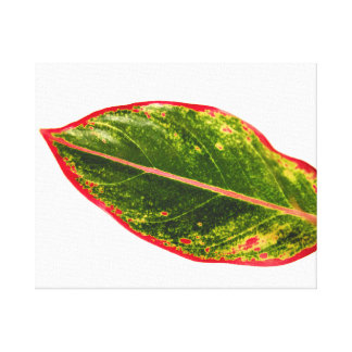 Canvas Prints of Tropical Plant Red Aglaonema