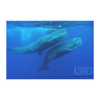 Canvas/Screen 91cm x 61cm - Azorean Whales Canvas Print