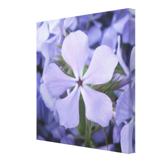 Canvas - Wrapped - Blue Phlox II Gallery Wrapped Canvas