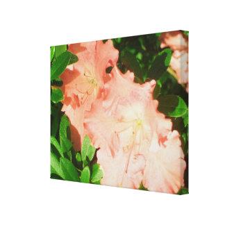 Canvas - Wrapped - Sunlit Peach Azaleas