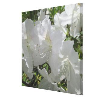 Canvas - Wrapped - White Azaleas Single