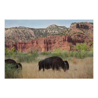 Canyon Buffalo Art Poster -60x40 -other sizes also