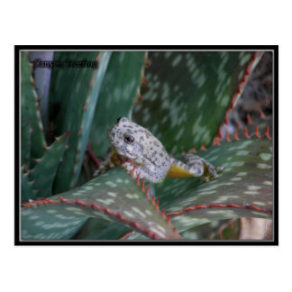 Canyon Tree Frog Postcard