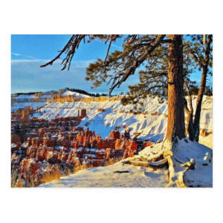 Canyon Winter Snow Pine Trees Utah Postcard