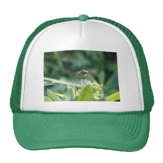 Cap cool mosquito hats