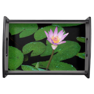 Cape Blue Water Lily (Nymphaea Capensis) Serving Trays