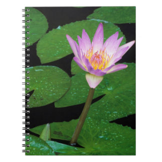 Cape Blue Water Lily (Nymphaea Capensis) Spiral Note Books
