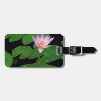 Cape Blue Water Lily (Nymphaea Capensis) Tags For Luggage